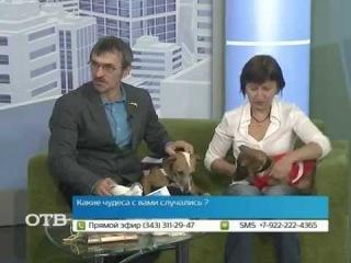Гонка за механическим зайцем: спортивные собачьи бега в Екатеринбурге (18.09.14)