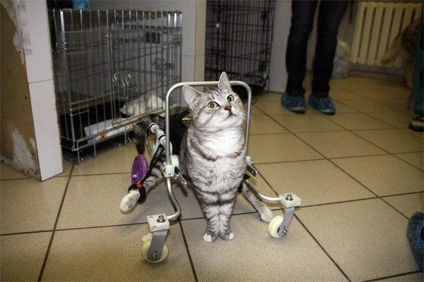 Коляска для кота инвалида - Инвалидные коляски для животных. - Форум Пес и Кот