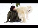 Белые волки играют с девушкой