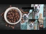 Cухой беззерновой корм для кошек Leonardo Adult Salmon GF