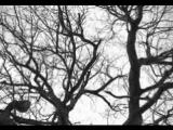 Wumpscut - Die In Winter