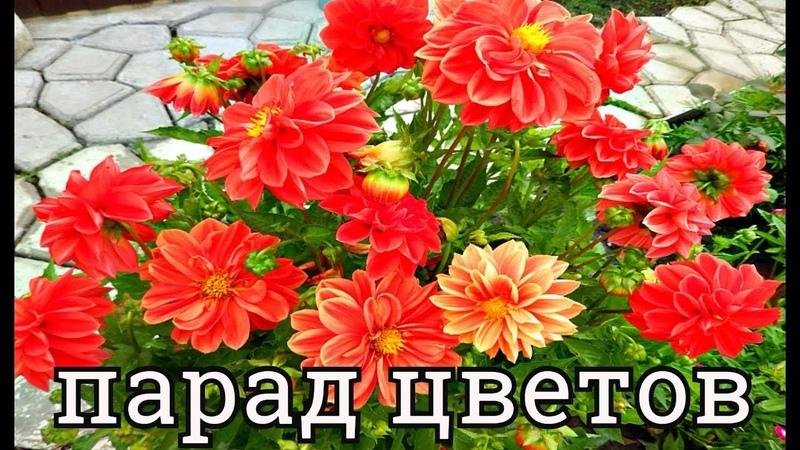 ПАРАД МОИХ ЦВЕТОВ В КОНЦЕ АВГУСТА