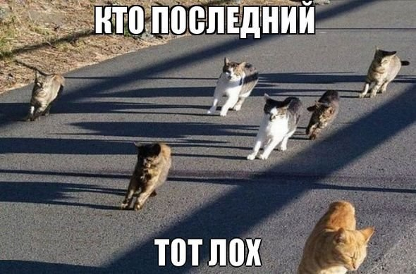 http://cs14115.vk.me/c7008/v7008113/11b73/lwwWchWWAvo.jpg