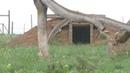Гепарды играют в догонялки Babette De Jonge