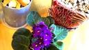 10 эффективных способов избавиться от мошек в цветочных горшках. Комнатные растения