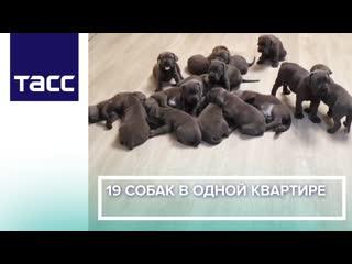 19 собак в одной квартире