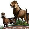 VIP ФЕРМА: нубийские козы, птицы, несушки купить