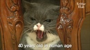 Angry Female Cat Rejects All Male Cats | Kritter Klub