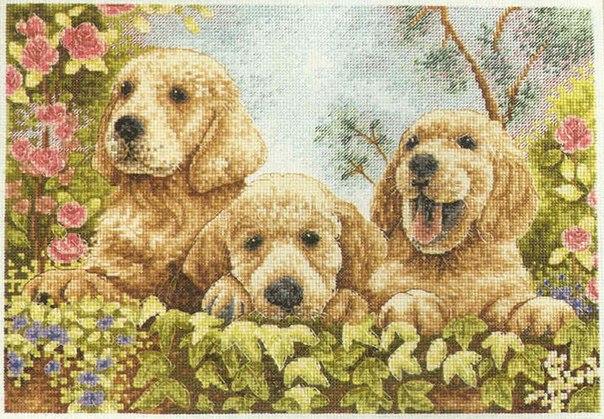 +щенки Puppies.rar