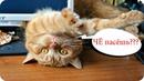 Приколы с котами с ОЗВУЧКОЙ – Смешные коты и кошки – ТЕСТ НА ПСИХИКУ - Domi Show