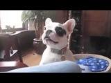 Best подборка лающих собак  2014 NEW