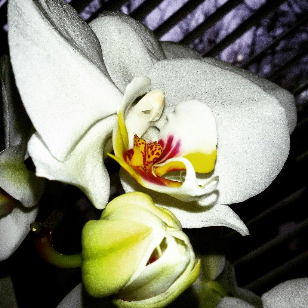 орхидея цветок гордость любовь красота