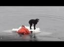Российский моряк, рискуя жизнью, спас собаку
