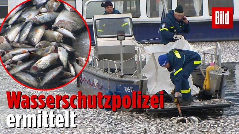 Власти Мекленбурга расследуют загадочное происшествие
