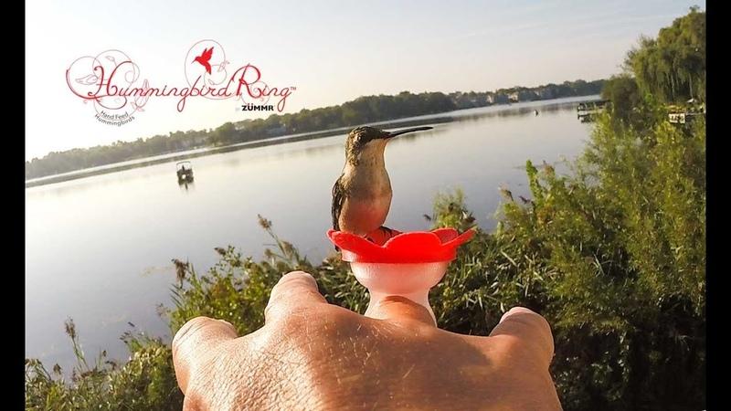 Hummingbird Ring Instructional Video