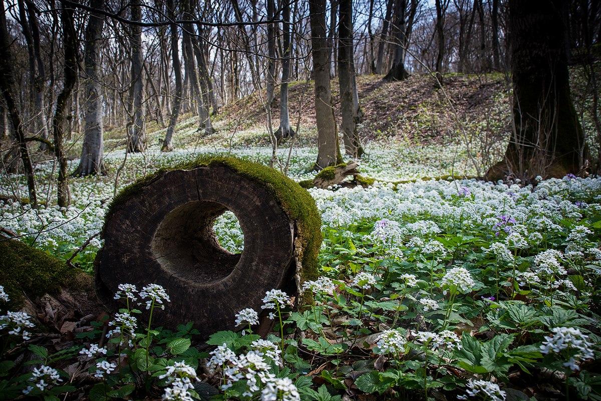 Весенний лес на северном склоне Бештау
