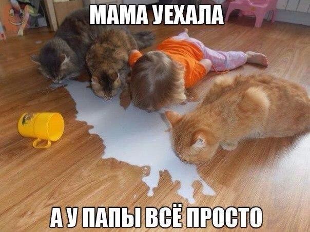 https://pp.vk.me/c7004/v7004659/193d8/87wWCIOejnk.jpg