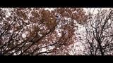 _alsou_sha_ video