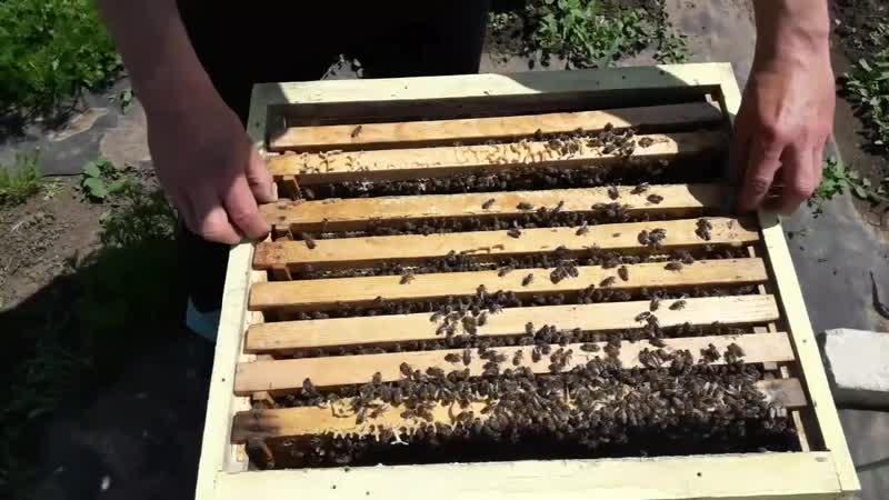 Расширение пчелосемей.