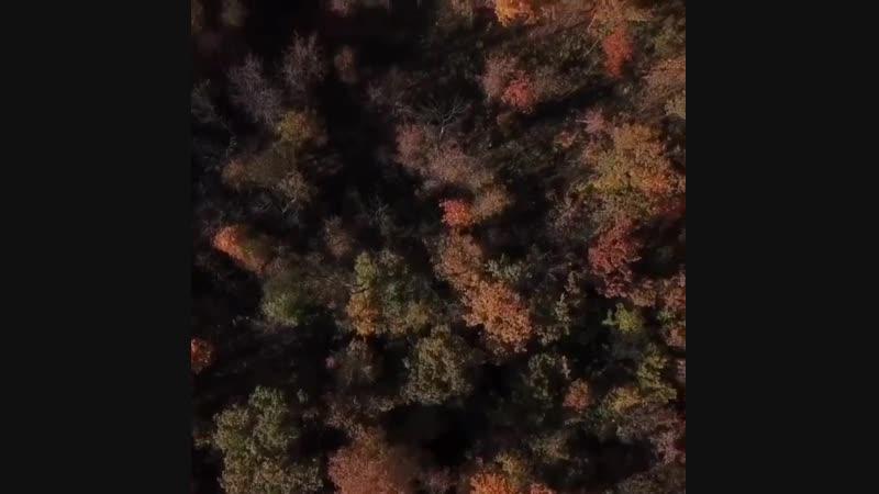 ВНИМАНИЕ! ЧРЕЗВЫЧАЙНОЕ ПРОИСШЕСТВИЕ!  В районе парка Останкино и Ботанического сада потерялся стаканчик Кофе на лету. Вчера он