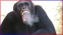 Top 50 Savage Animals! 🐾