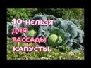 10 НЕЛЬЗЯ для РАССАДЫ КАПУСТЫ