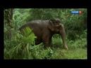 1 Дикая природа островов Индонезии 1 я серия от 10 09 2018