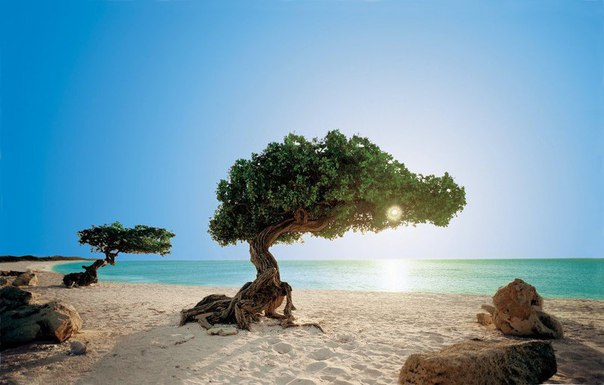 Аруба – это рай на земле. Остров невероятной красоты