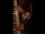 Still Dre piano