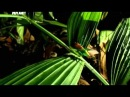 Войны жуков-гигантов / Monster bug wars Мать всех войн