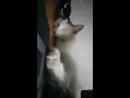 как спит кот