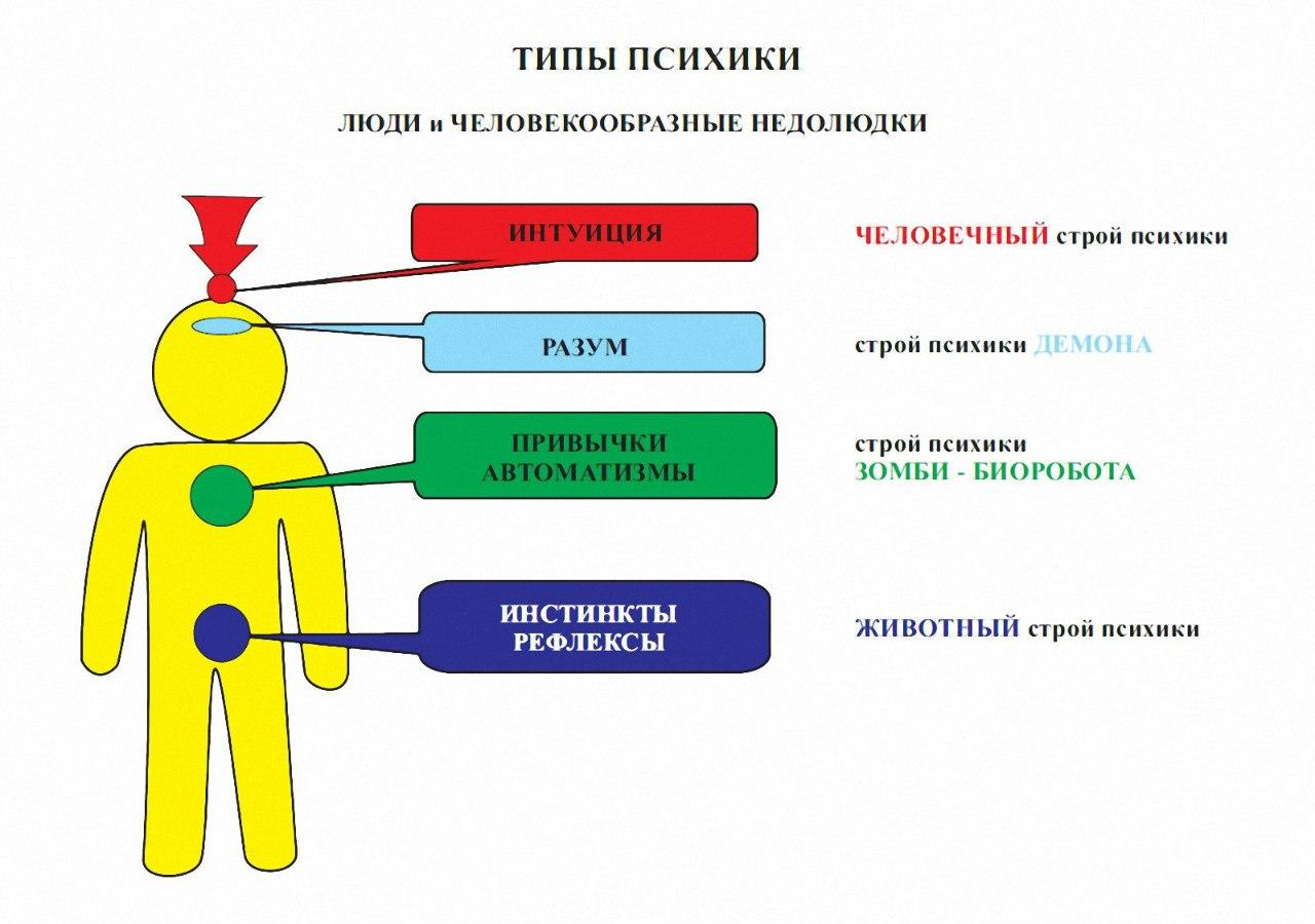 Схема организации инстинктивного поведения
