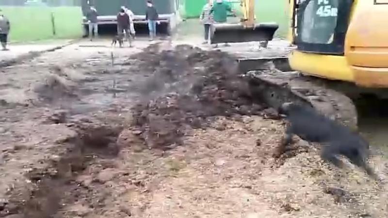Собаки-чистильщики