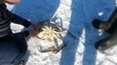 Зимний краб | Рыбалка на Сахалине