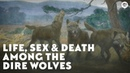 Life, Sex Death Among the Dire Wolves