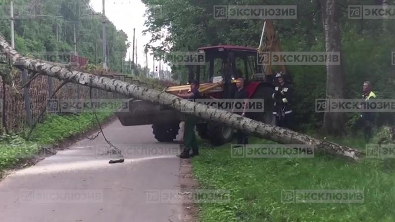 Дерево упало на линию электропередач