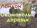 Центр Лондона Окаменелые деревья Regent's Park С Жданов