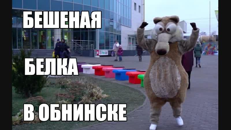 Бешеная белка в Обнинске