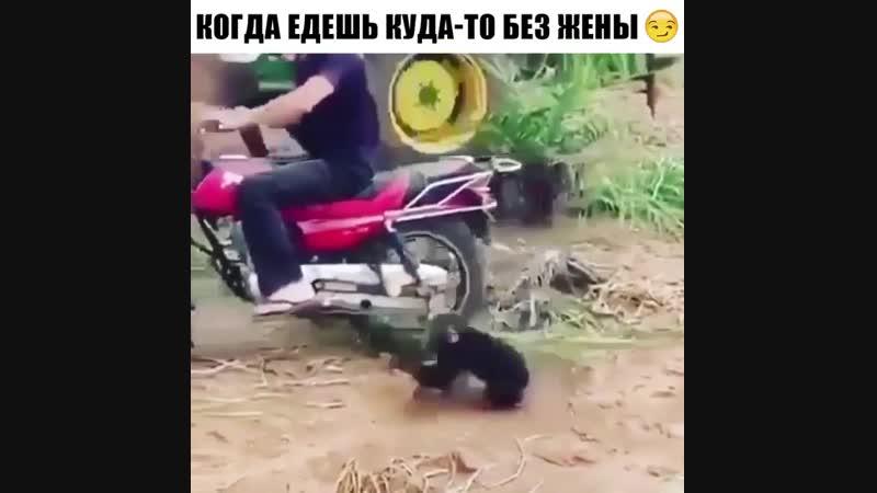 Ручная обезьянка.