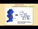 Механизм действия пептидов Хавинсона