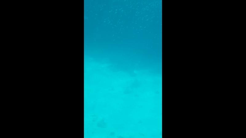 W a r m n o s t a l g i a ❤ r e d s e a 🌊 Двадцать тысяч лье под водой