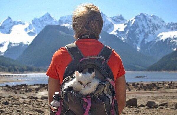 коты путешествуют