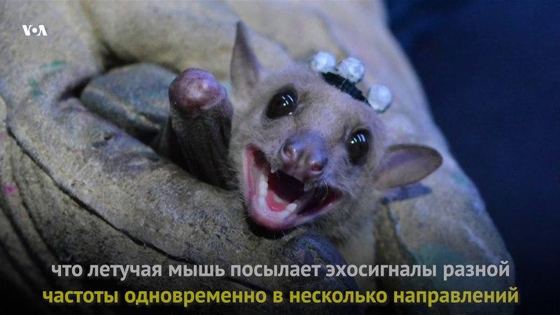 Радар летучей мыши