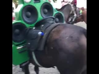 Look at my horse