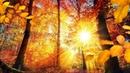 Добрых дней вам и ясной погоды