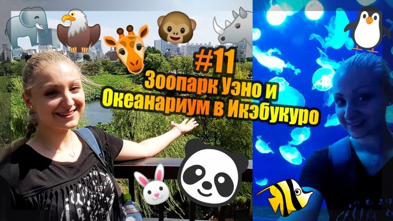 11 Trip to Japan 3 Зоопарк Уэно и Океанариум в Икэбукуро