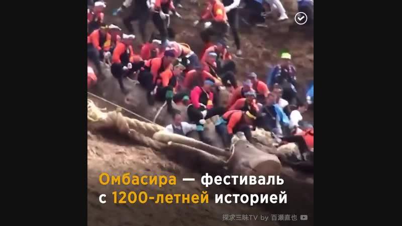 Рискуя жизнью, люди скатываются с горы на огромных бревнах! 😳