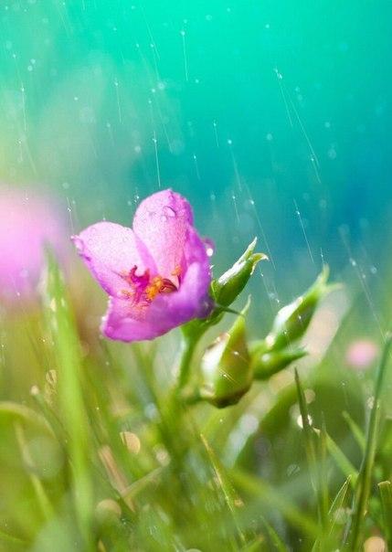 Картинки по запросу цветы под дождем