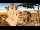 Finger Family Rhymes 3D Lion King Cartoons for Children | Lion Finger Family Children Nursery Rhymes