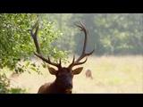 Дикая природа (music - Ennio Morricone)